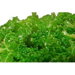 Cold Pressed Kale Juice - 500ml