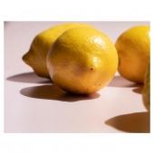 The natural content of vitamin C, ascorbic and Citric acid in our lemons helps us to achieve our desired shelf life.  📸@enhancelifestyles #goodnaturefamily #goodnaturejuice #bestjuicer #bestjuice #coldpressedjuice ##rawjuice #juicebusiness #juice #juiced #juicelife #naturaljuicejunkie #naturaldrink #eatmoreveggies #lemon #lemons #coldpressedlemon #lemonbenefits #irishbusiness #irishsmallbusiness #irishdelivery #irishmade #therawjuicecompany #therawjuicecompanyireland